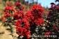 江西省适合种植的景观树苗,观赏价值高的树种苗基地